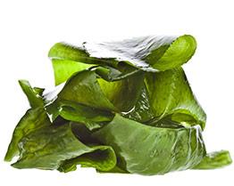 natürliche Algen